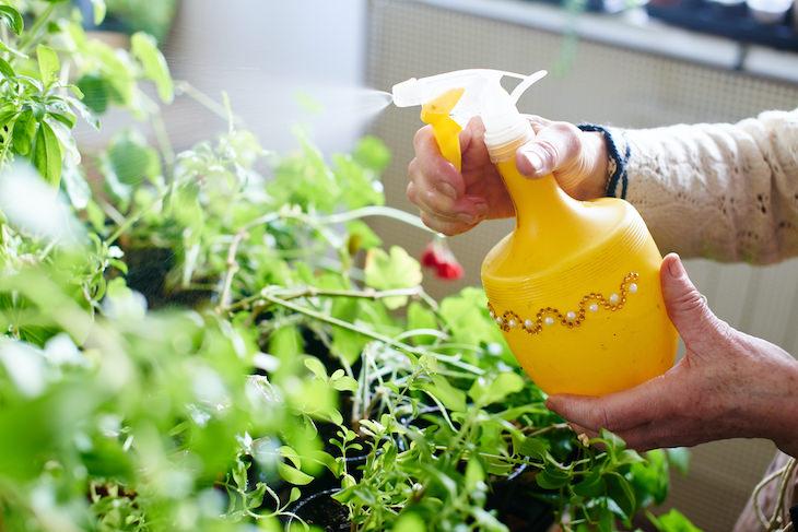 2. ¿La planta se riega en exceso o en exceso?