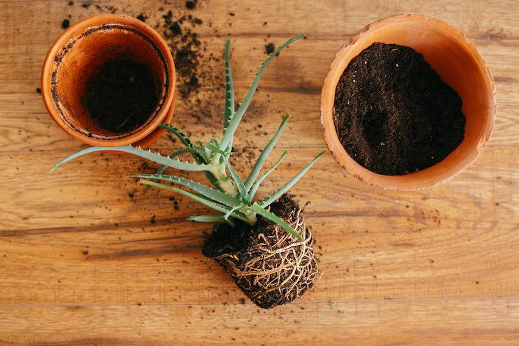 1. Revisa las raíces