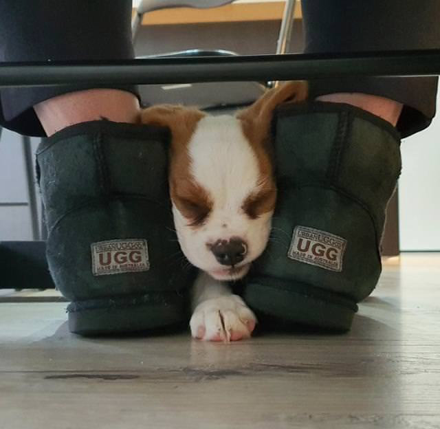 15 Momentos De Animales Divertidos Cachorro entre las piernas