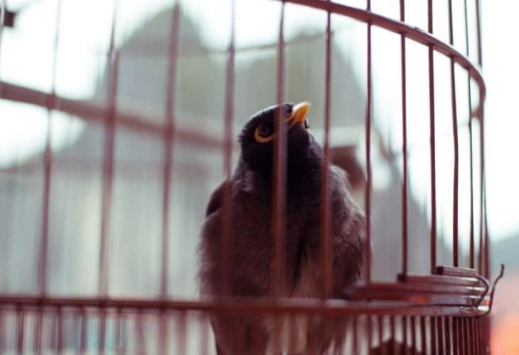 Chiste: Un Pájaro En Problemas