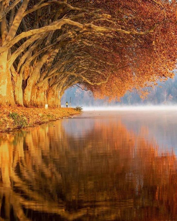 Conmovedoras Fotos Que Nos Muestran La Belleza De La Naturaleza Lago Baldeneysee en Essen, Alemania