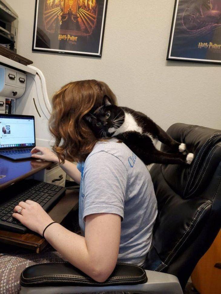 Mascotas Que Exigen La Atención De Sus Dueños Gato recargado en su dueña