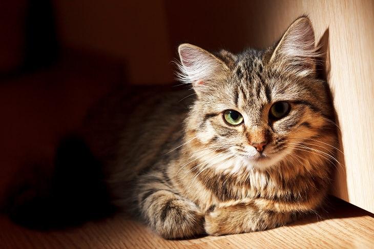 Parásito Que Puede Controlar Nuestro Sistema Inmune Toxoplasma Gatos