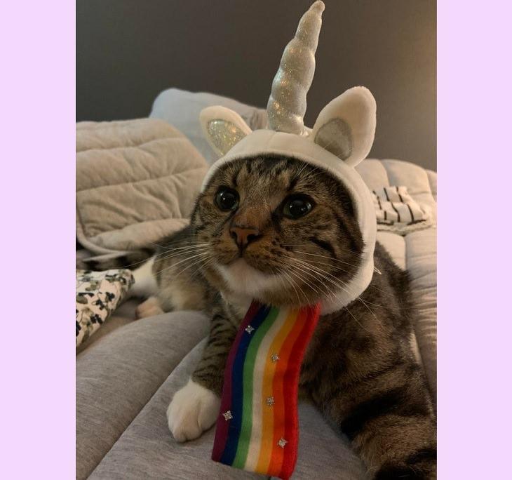 Adorables Fotos De Gatitos Usando Disfraces Unicornio