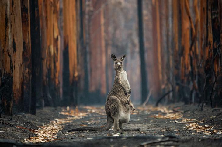 """Fotografías Ganadoras Naturaleza """"Esperanza en medio de las cenizas"""" de Jo-Anne McArthur - Ganadora del gran premio"""