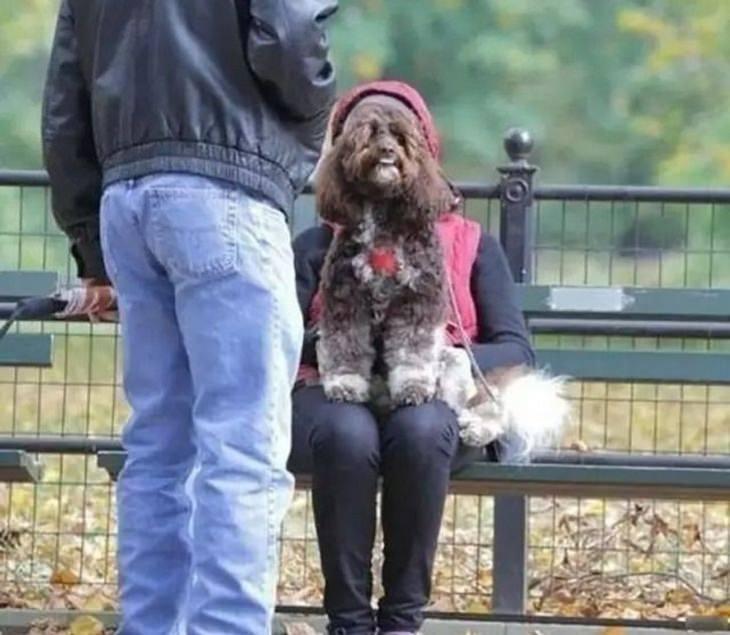 1. Cuando un perro se transforma en humano ... y tiene ganas de relajarse en el parque