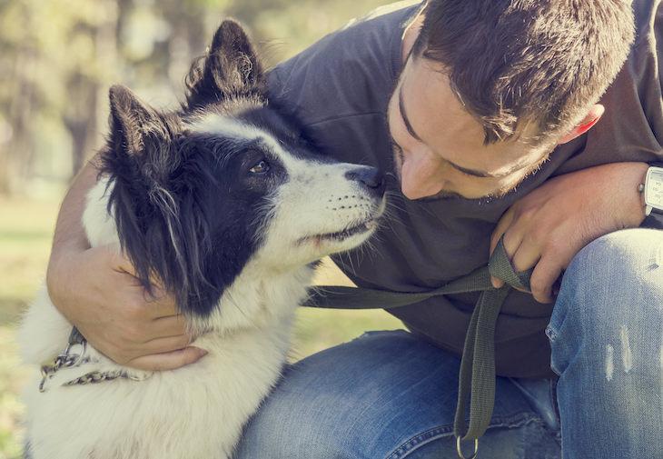 Estudio: Los Perros Reaccionan Positivamente Cuando Les Dices Que Los Amas