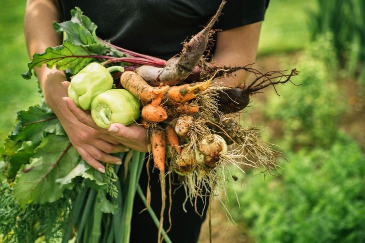 Estudio Encuentra Que La Jardinería Te Hace Más Feliz