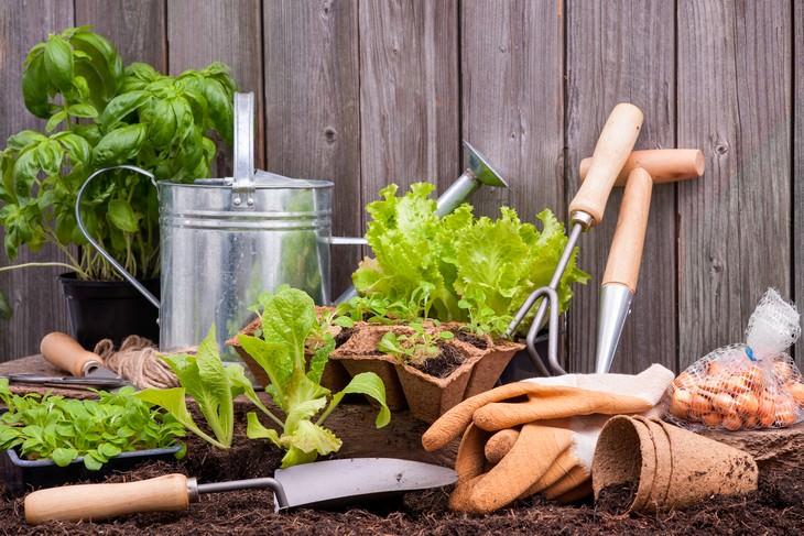 Estudio Descubre Los Beneficios De La Jardinería Para Tu Salud Mental