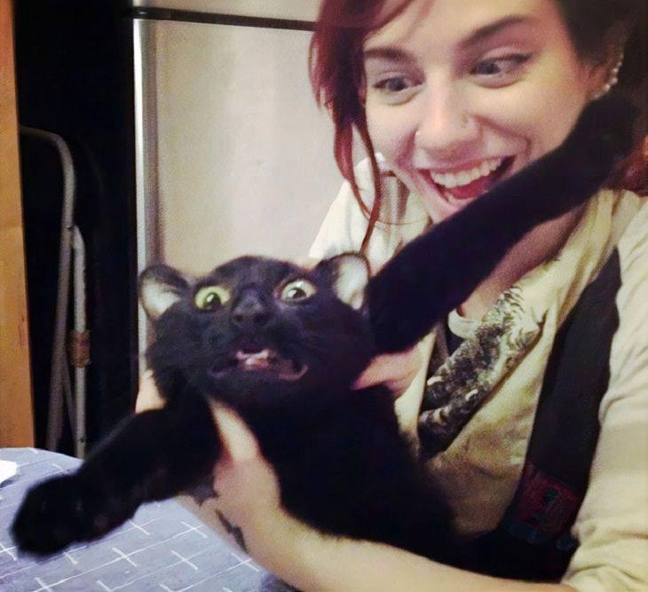 Gatos Que No Quieren Abrazos Gato huyendo de su dueña