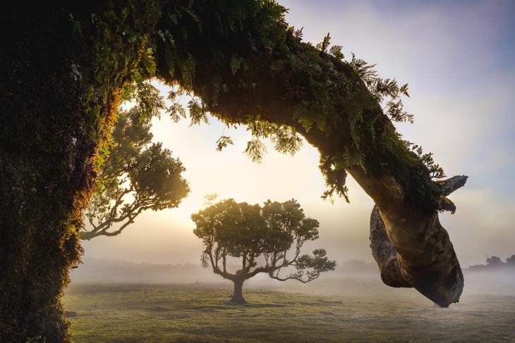 Paisajes Del Bosque De Madeira Rama de árbol