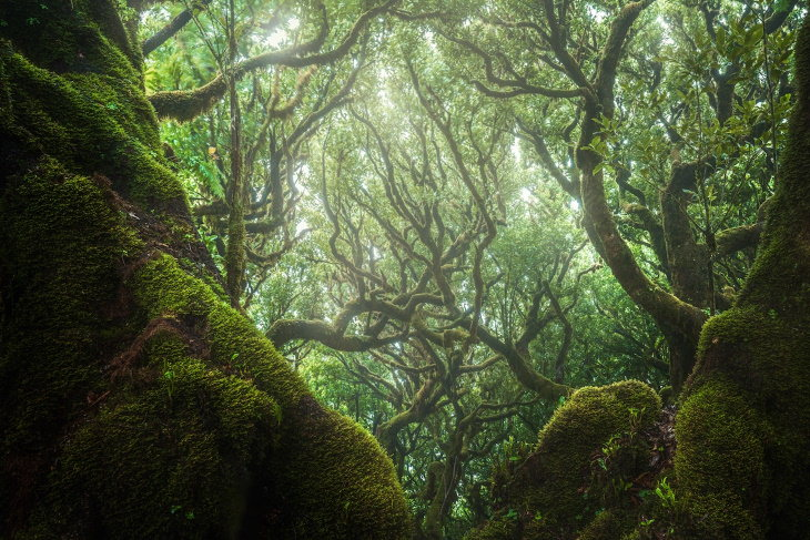 Paisajes Del Bosque De Madeira Bosque verde