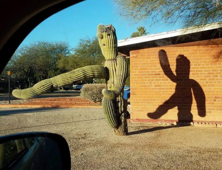 Fotos Confusas cactus danzante