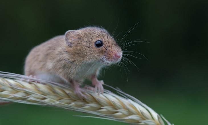 Extraños Experimentos Del Mundo Células cerebrales cultivadas en ratones fetales