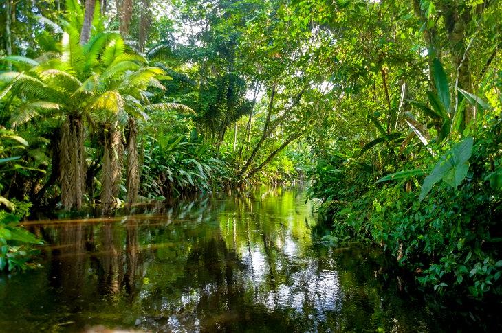 Cuento Espiritual: El Explorador Del Amazonas
