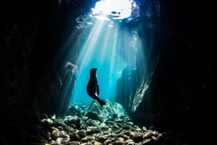 Fotos Ganadoras De Las Maravillas Del Océano El ganador de la categoría paisajes marinos submarinos: un león marino bebé jugando en una cueva cerca de Los Islotes en México