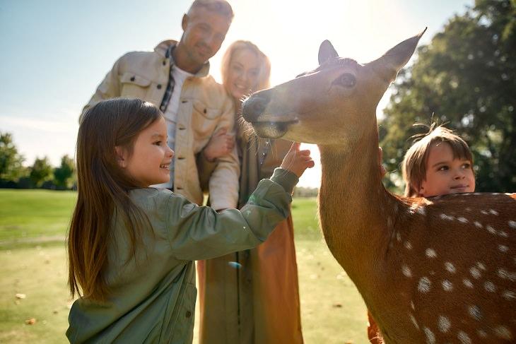 Los Grandes Beneficios Para La Salud De La Ecoterapia Terapia asistida por animales