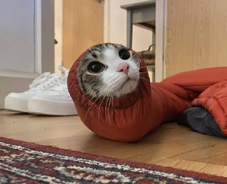 2. Cuando la curiosidad convierte a un gato en un hurón