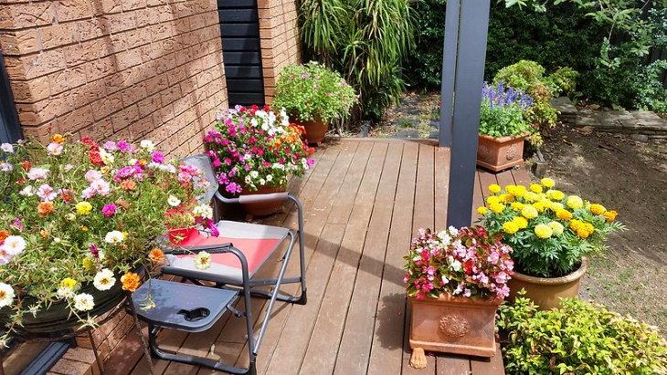 Las Plantas Más Fáciles De Cultivar En Contenedores Flores para crecer en macetas que reciben sol total o parcial