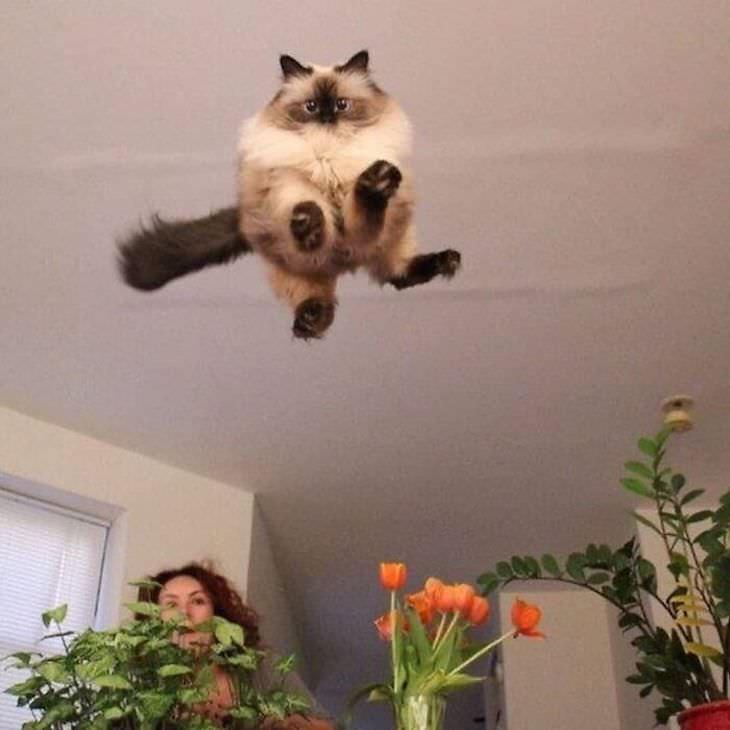 Fotos De Gatos Con Comportamientos Extraños Gato brincando