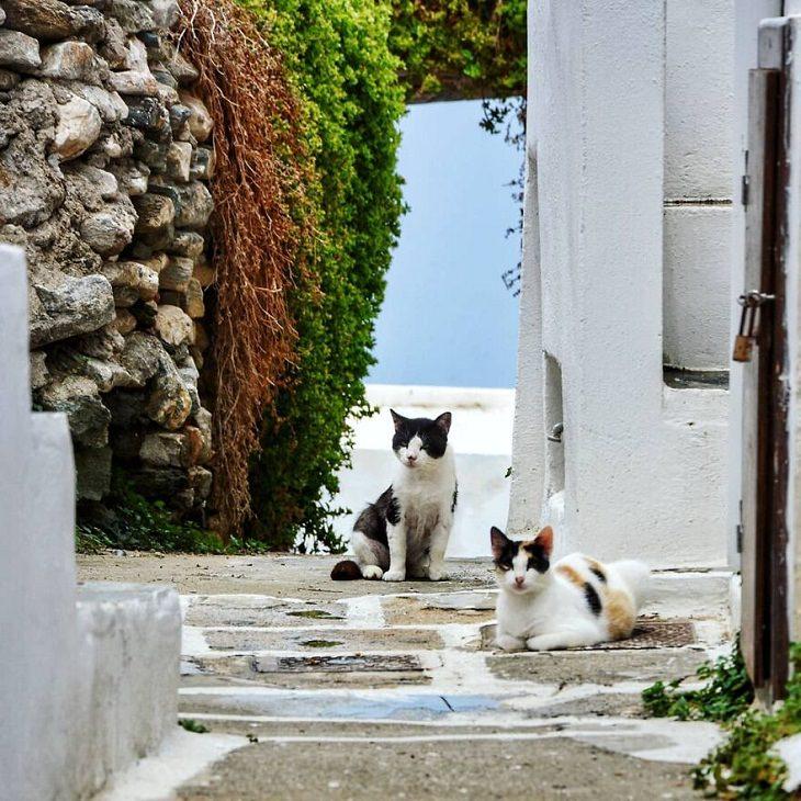 La Belleza Idílica De La Isla De Sifnos En Grecia Gatos