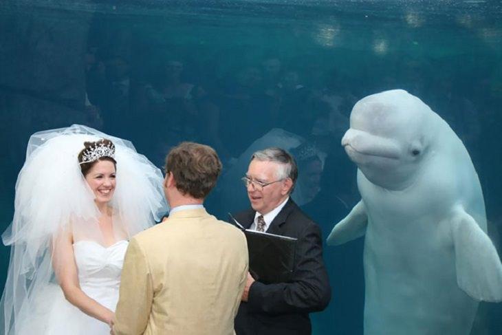 Fotobombas Divertidas Boda con una ballena de testigo