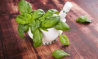 7 posts plantas aromáticas