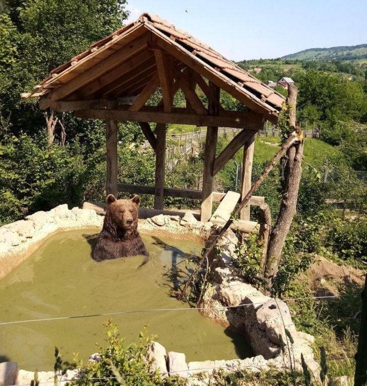 Encuentros De Humanos y Animales Un oso descansando en un centro de rescate de osos en Croacia.