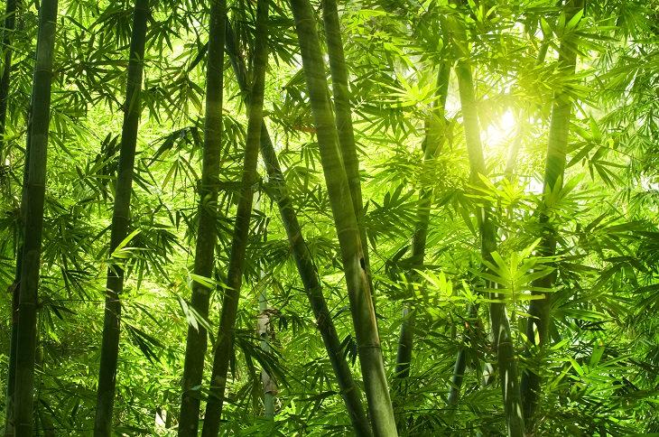Cuentos Para Reflexionar: El Bambú Japonés