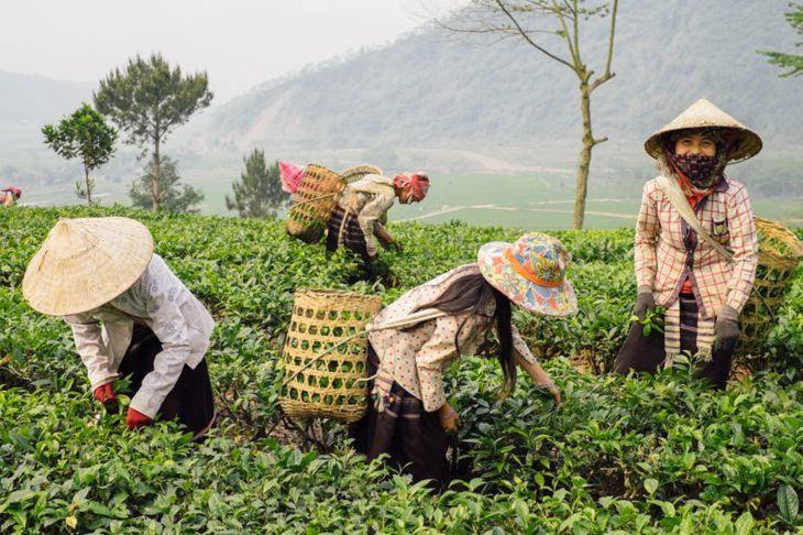 El Encanto De Vietnam En 17 Imágenes Campesinos