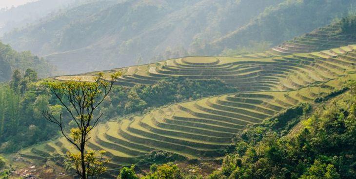 El Encanto De Vietnam En 17 Imágenes Campos de arroz