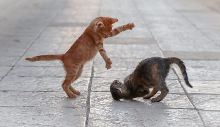Estudio Demuestra El Vínculo Afectivo Entre Los Gatos y Sus Dueños Gatitos jugando