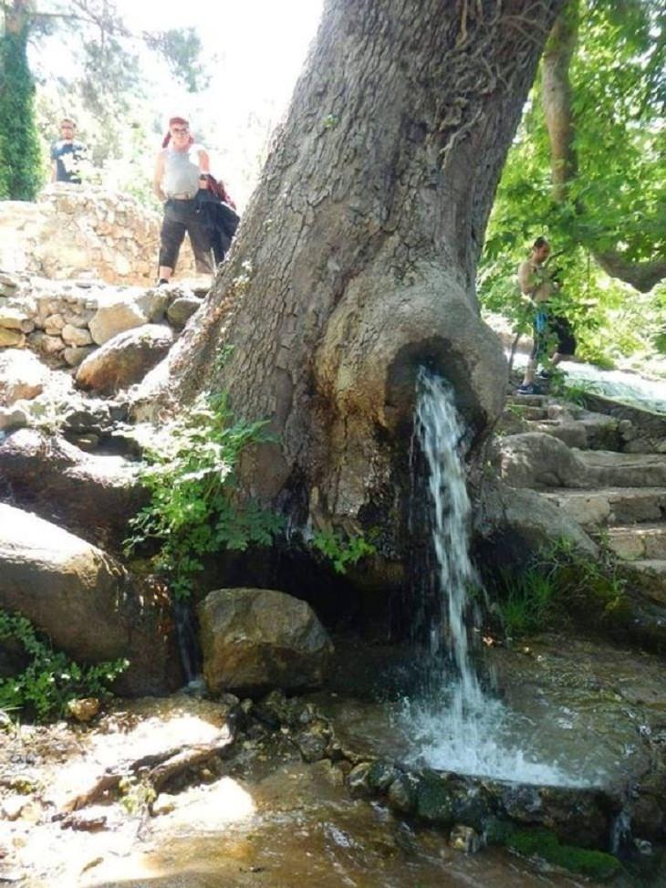 1. Este arroyo atraviesa un árbol.