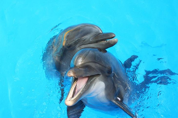 10 Criaturas Marinas Más Amigables Del Mundo Delfines (Delphinidae)