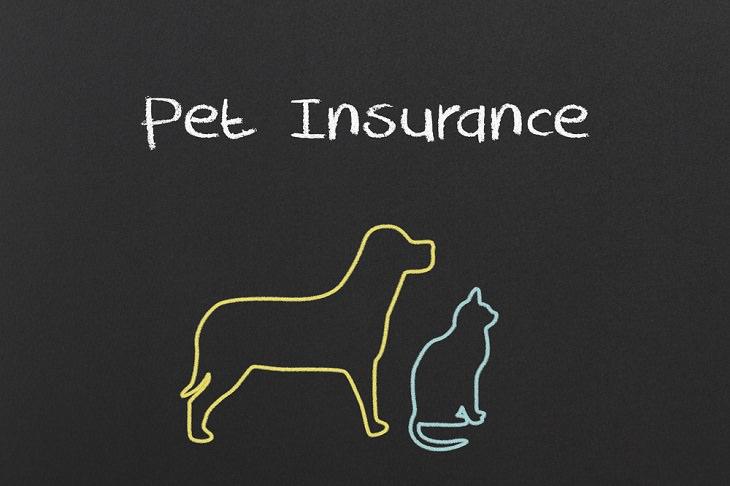Consejos Para Ahorrar Dinero En El Cuidado De Las Mascotas Obtén un seguro para mascotas. Pero elígelo sabiamente