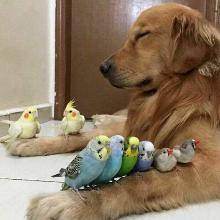 Fotos De Animales Para Alegrar Tu Vida Perro descansa con pajaritos