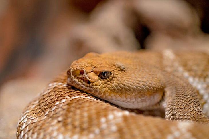 Este Olor Puede Significar La Presencia De Serpientes
