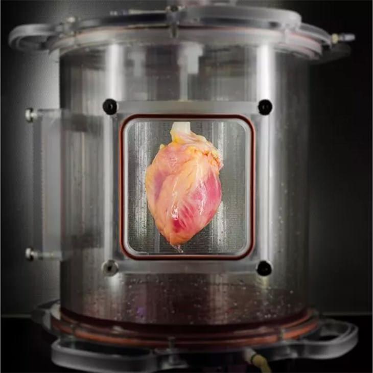 Científicos Crearon Un Corazón Humano En Un Laboratorio