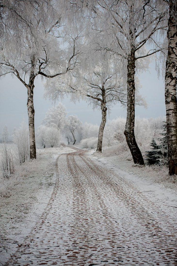 Encantadores Caminos Forestales De Polonia Árboles nevados