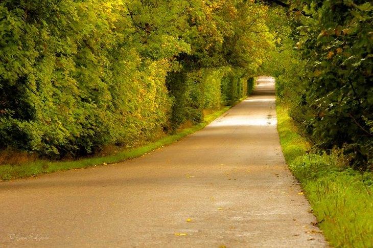 Encantadores Caminos Forestales De Polonia Camino con arbustos