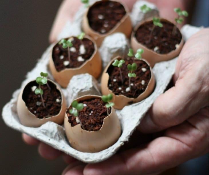 Usos De Las Cáscaras De Huevos En Tu Jardín