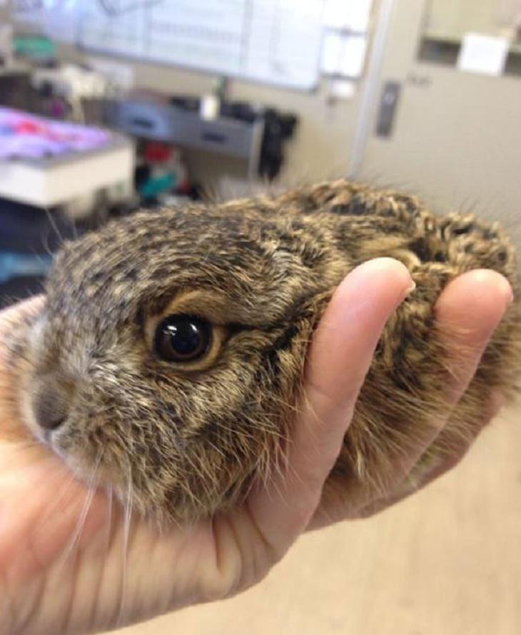 Veterinarios Con Sus Adorables Pacientes Conejo
