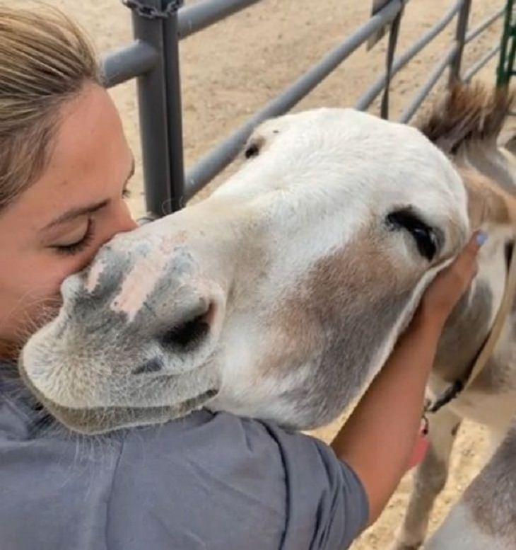 Amistad Entre Humanos y Animales Burro