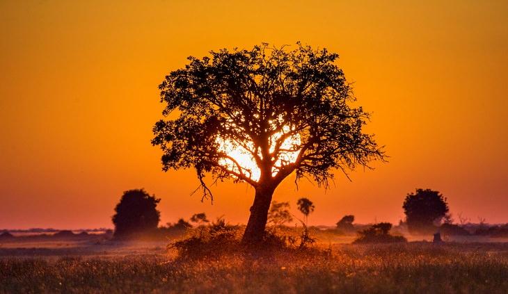 Hechos Sobre La Sabana Africana La sabana africana no es la única sabana del mundo