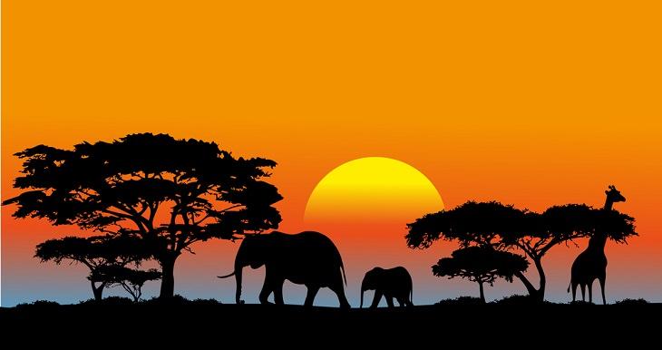 Hechos Sobre La Sabana Africana El 65% de África es la sabana