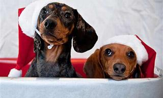 25 Hermosas Imágenes De Mascotas En Navidad