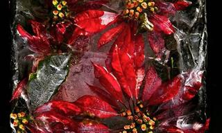 16 Ramos De Flores Congelados En Hielo y En El Tiempo