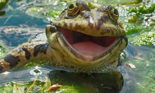 25 Sonrientes Animales Que Te Llenarán De Felicidad