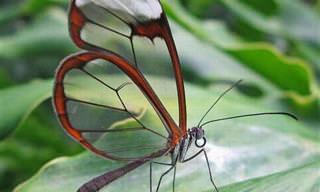Colección De Preciosas Mariposas Vistas Desde Muy Cerca