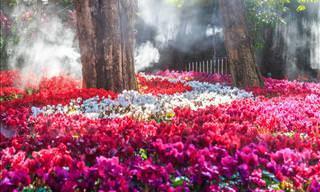 14 Hermosas Flores De Otoño. Renueva Tu Jardín